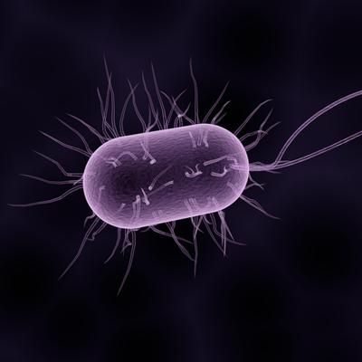 Penicilline het eerste antibioticum